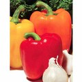 Red, Yellow, or Orange Bell Peppers